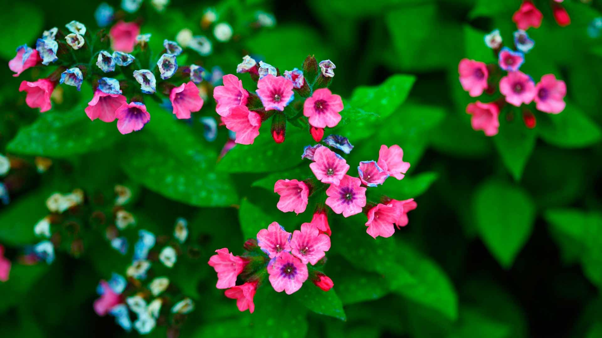 Обои Цветы для мамы, картинки - Обои для рабочего стола ...