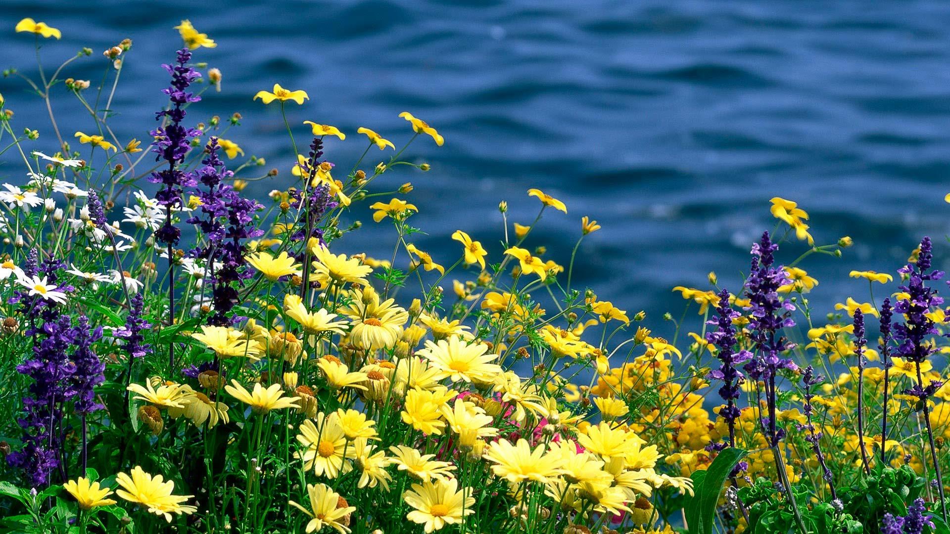 Картинки с четвергом доброго утра анимация цветы каких знаках