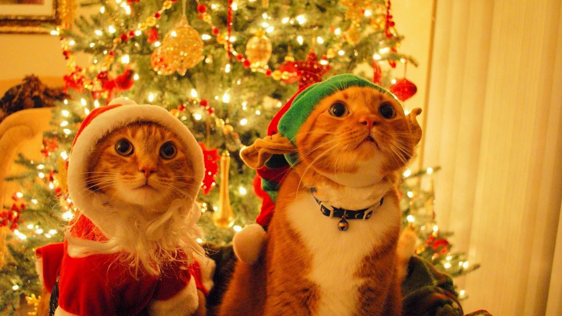 ещё фото жду новый год останется