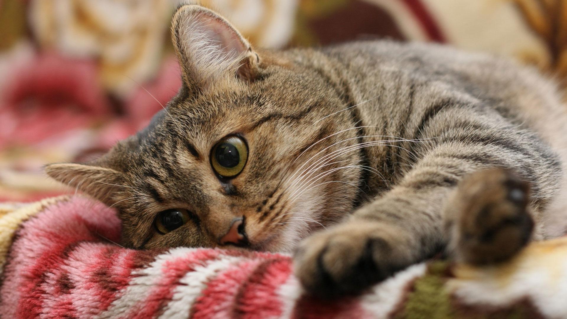 Можно ли фотографировать кошек приметы знает, крайней