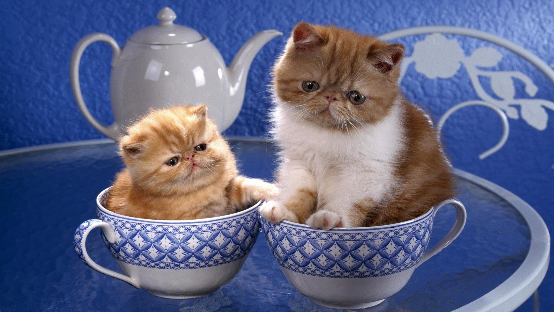 оформить котята в кружке картинки дело