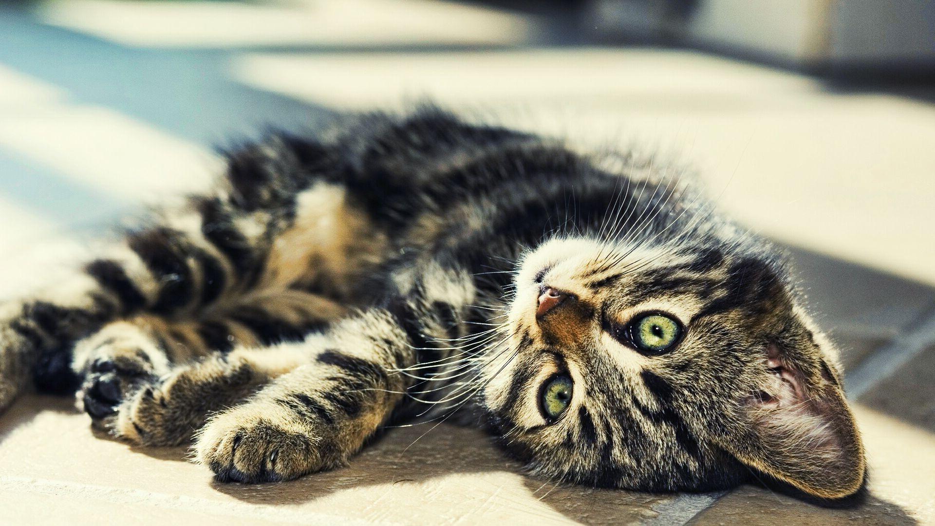 лежащие коты картинки видно