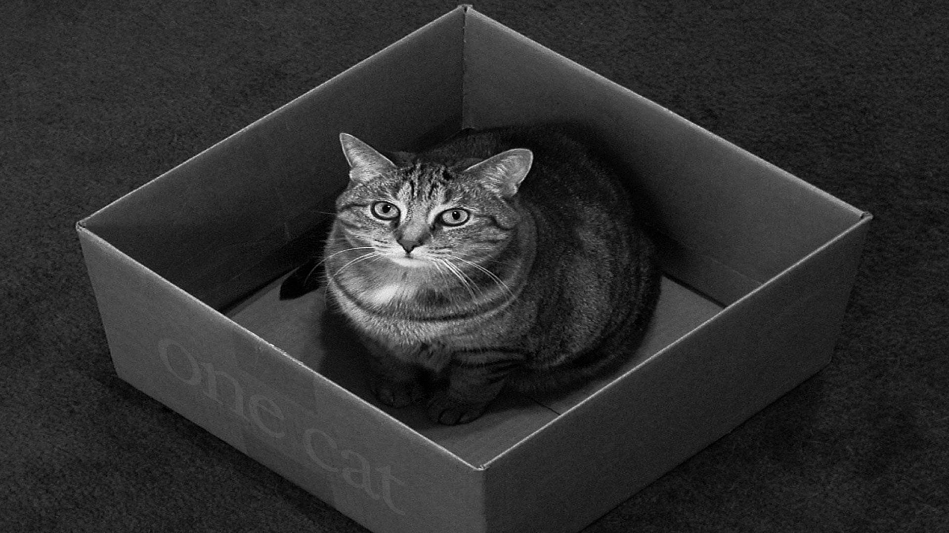 Обои Кот в коробке, картинки - Обои для рабочего стола Кот ...