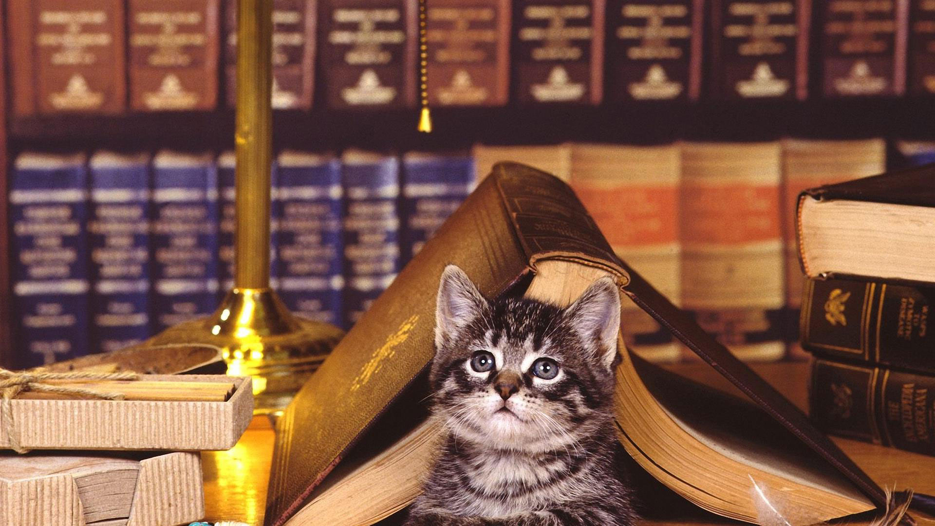 Красивые и необычные книжные полки в интерьере | 50 идей ...
