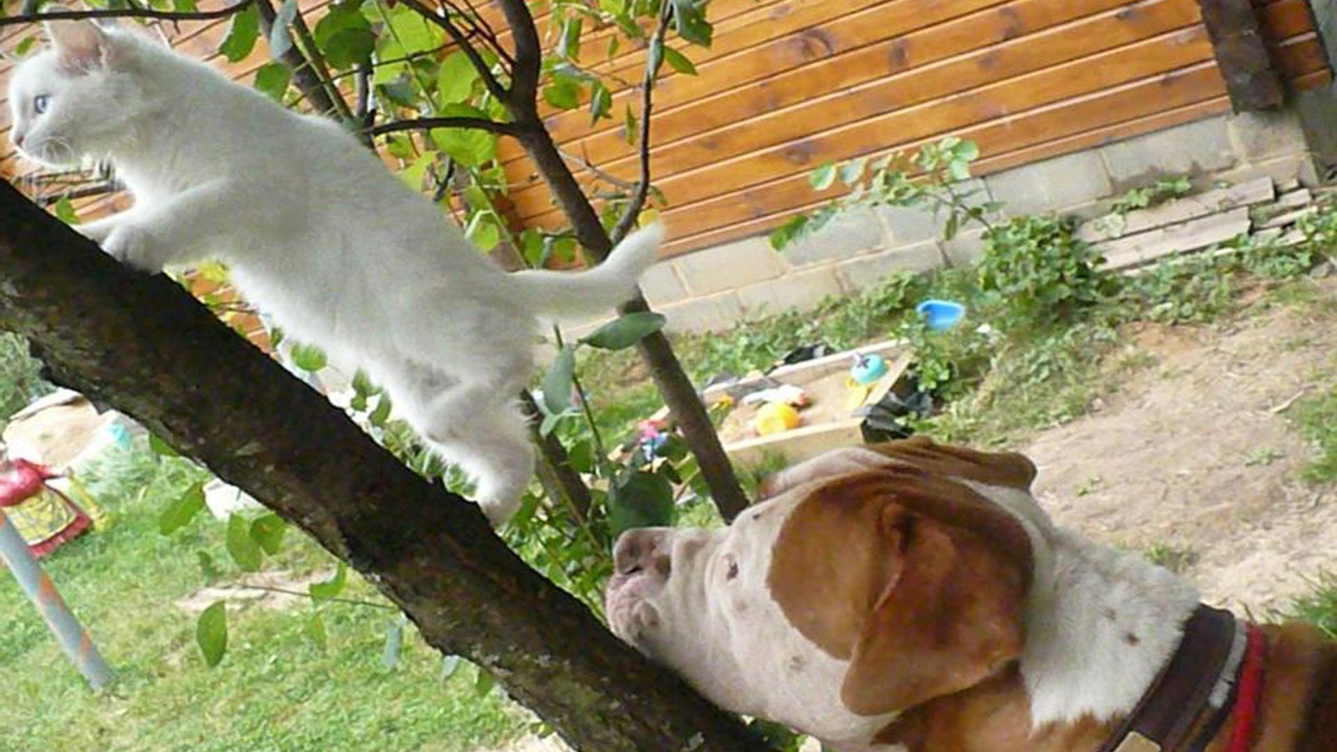 Обои Кошка и собака, картинки - Обои для рабочего стола ...