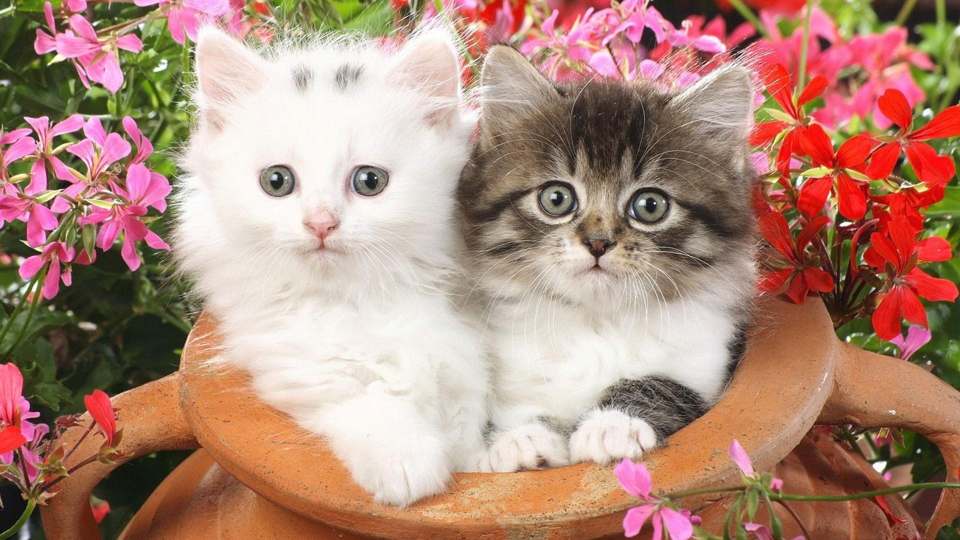 картинки с цветами и котятами виде метелки