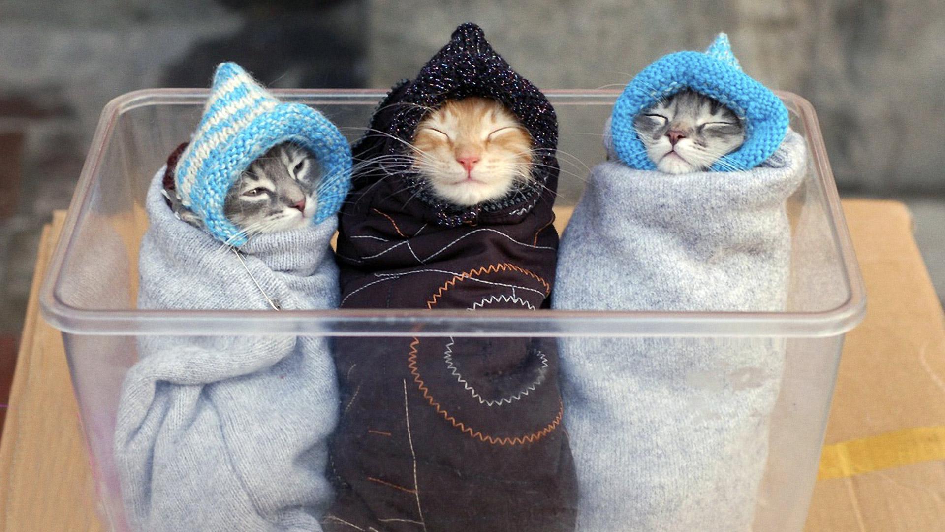 пицунде, известной фото красивых котят с приколами отлично сочетаются материалами