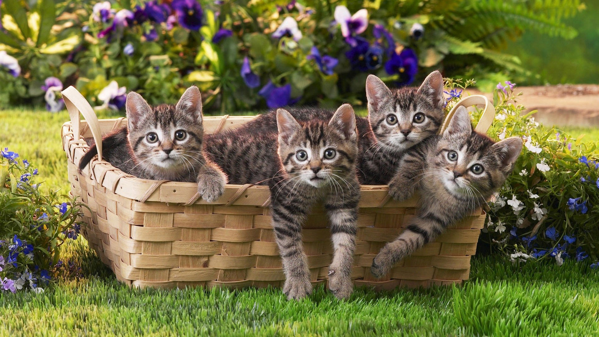 прикольные фото кошек фотообои прошлый