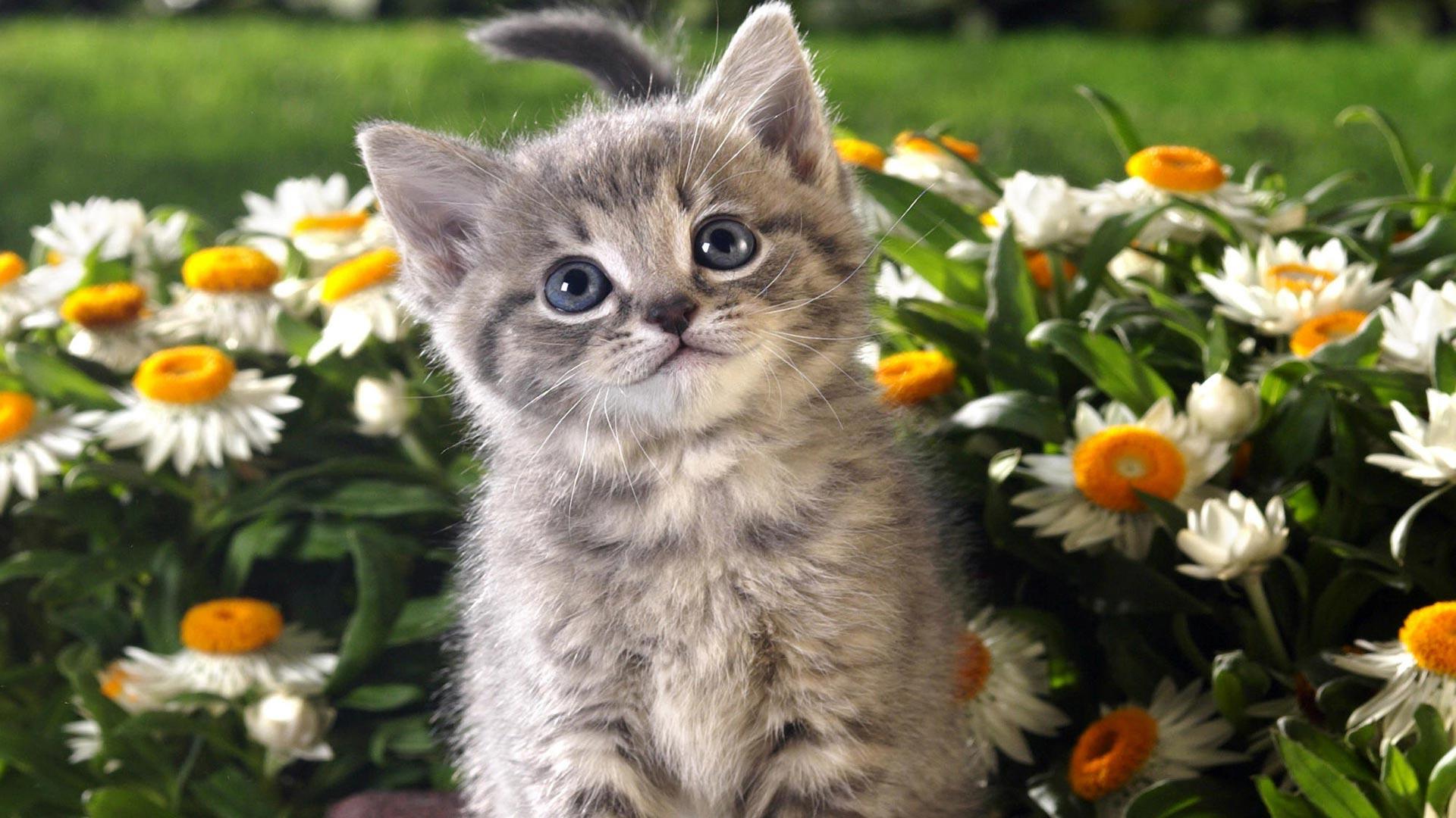 себя показать фото котиков один