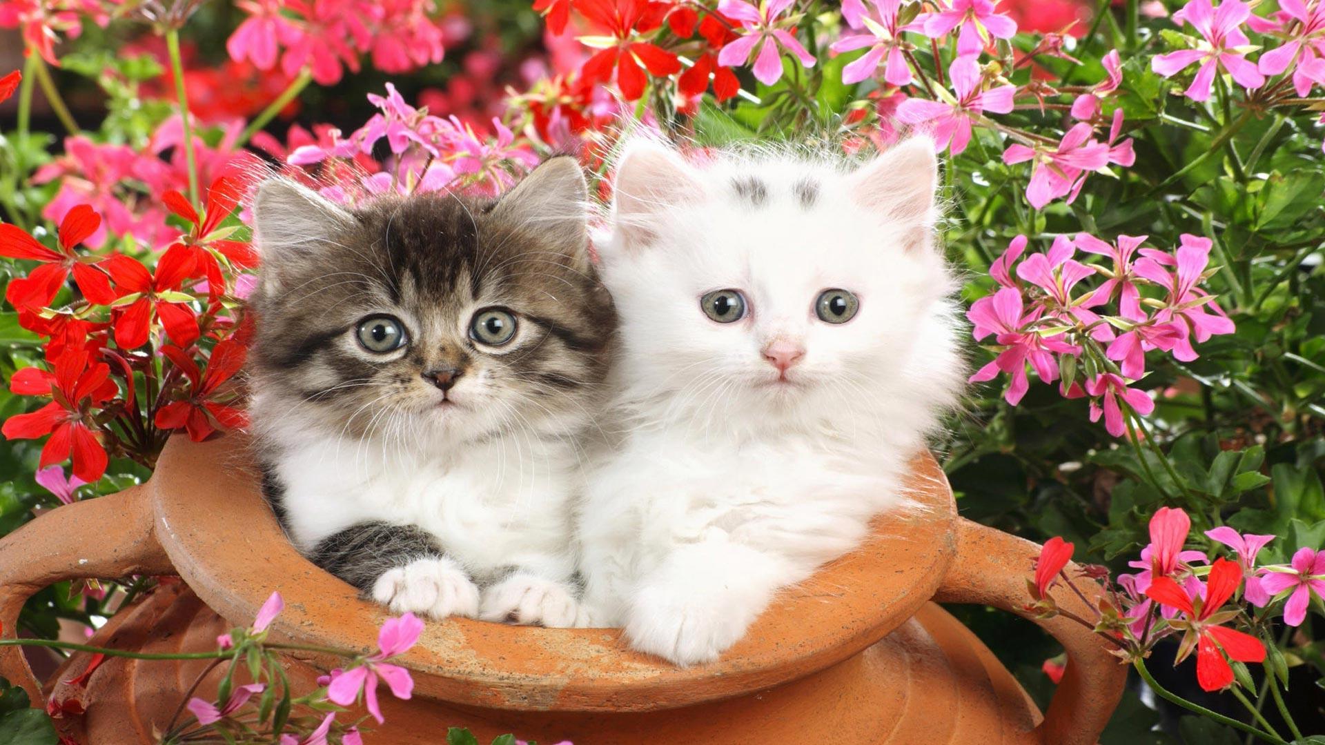 Картинки на телефон красивые живые обои котята