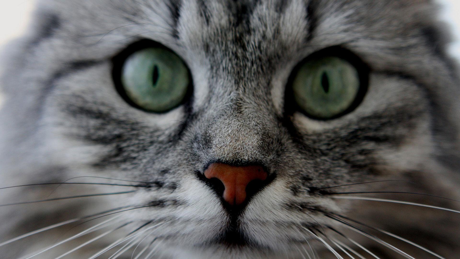 картинки кошки на рабочий стол телефона