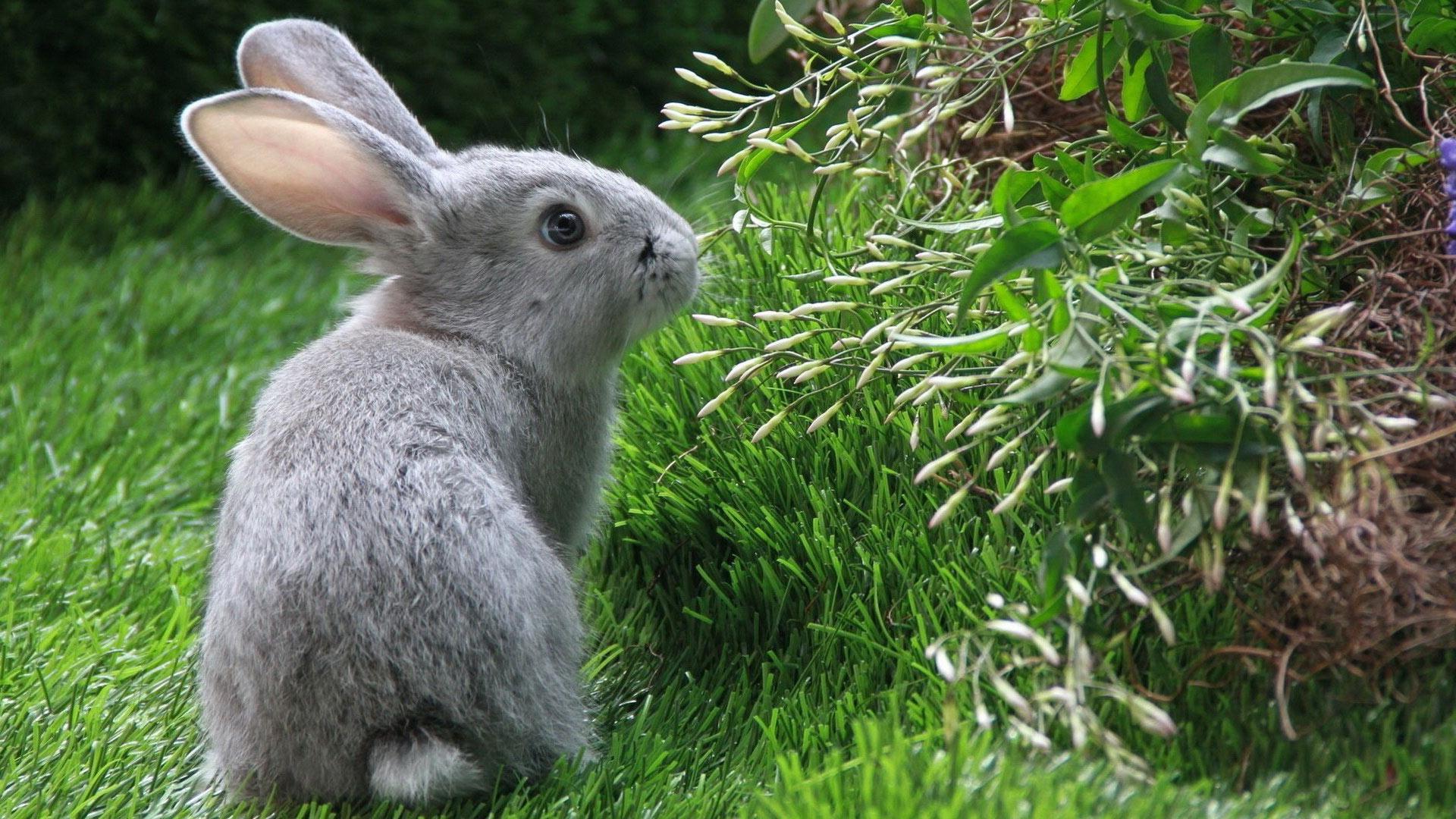 Млекопитающие это какие животные список фото очень важное