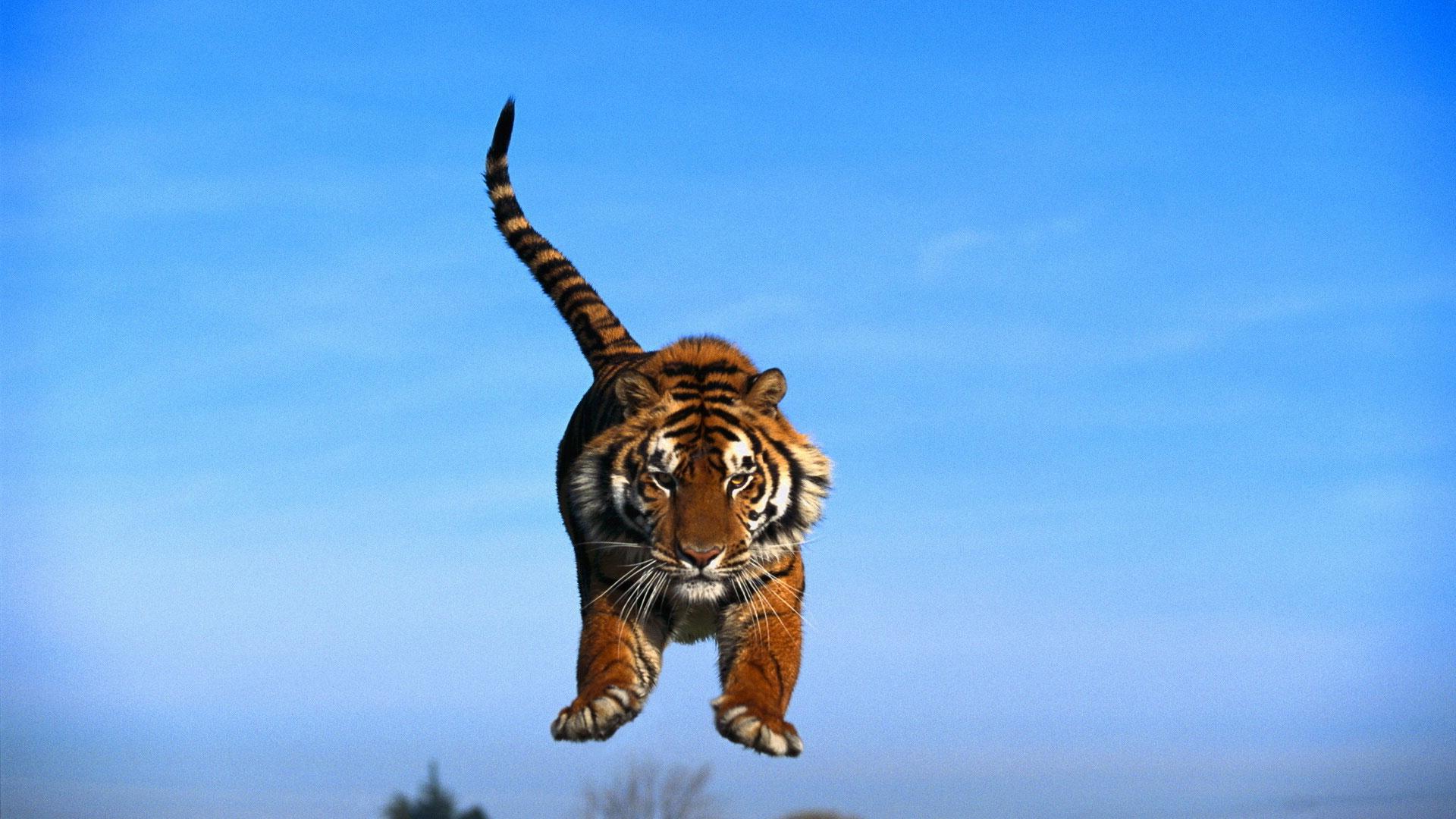 Дикие кошки Фото диких кошек Пантеры тигры рыси львы