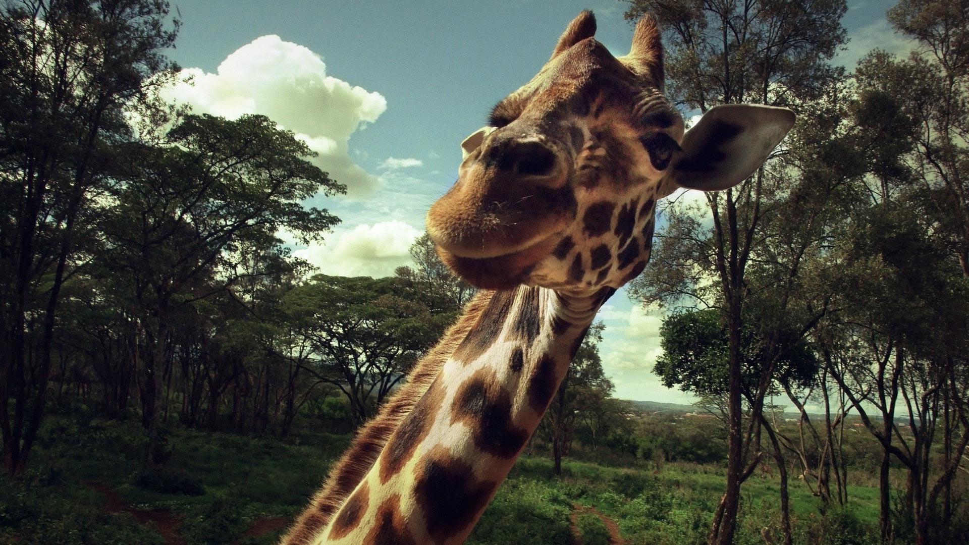 Картинки носов разных животных самые тяжёлые