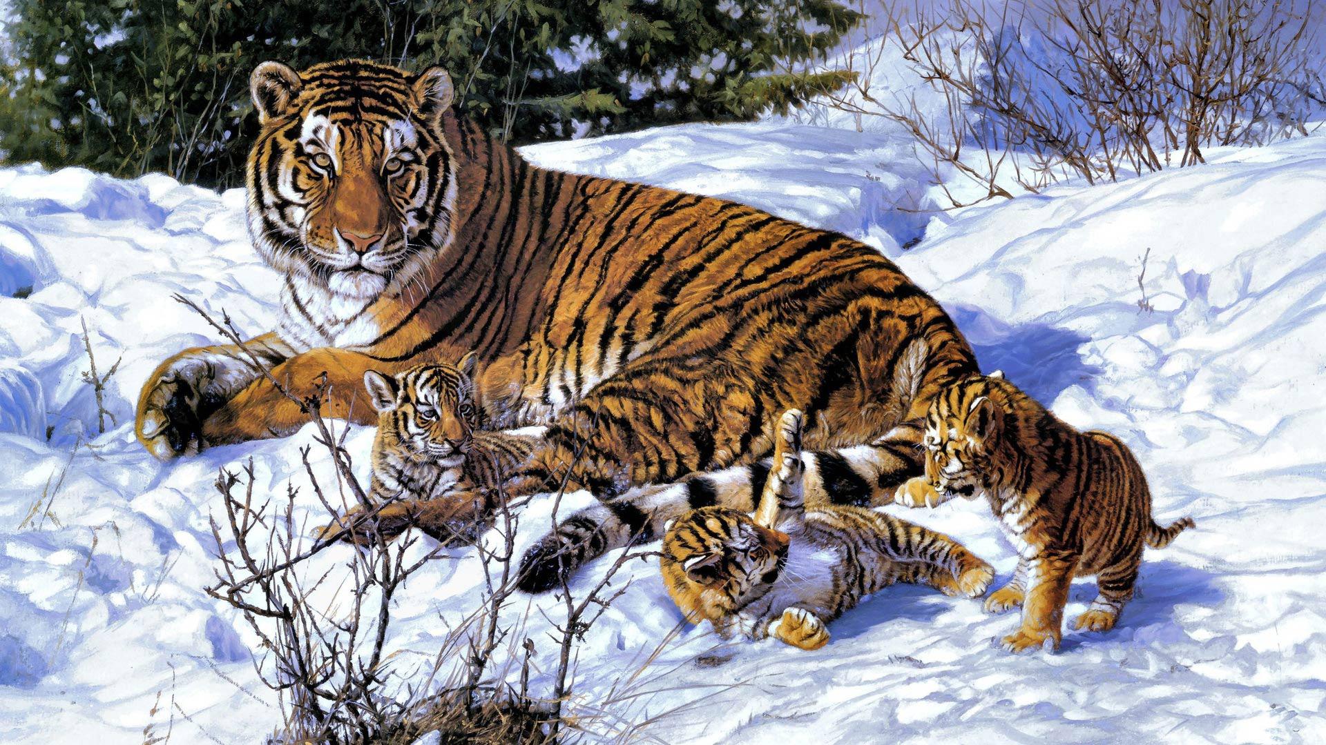 тигрята зимой фото