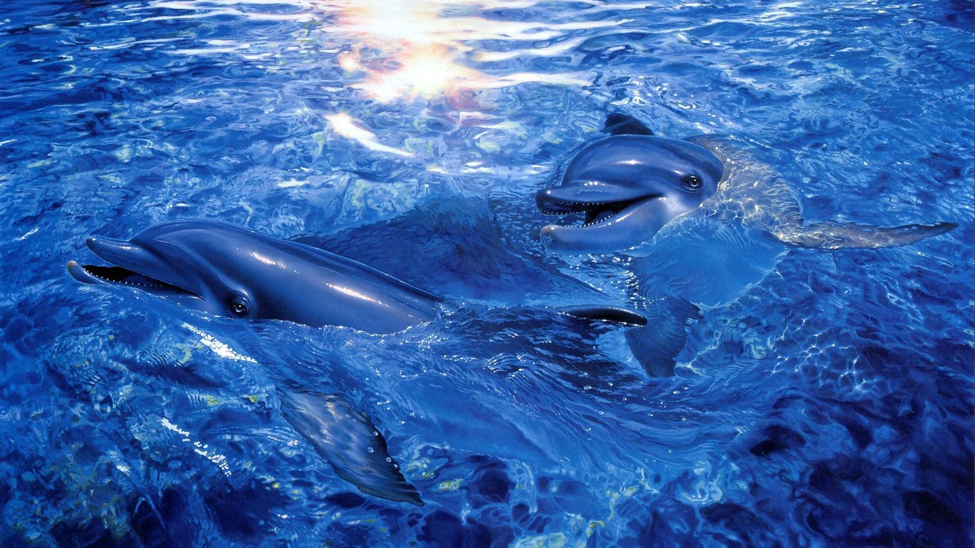 Высококачественные фотографии дельфинов