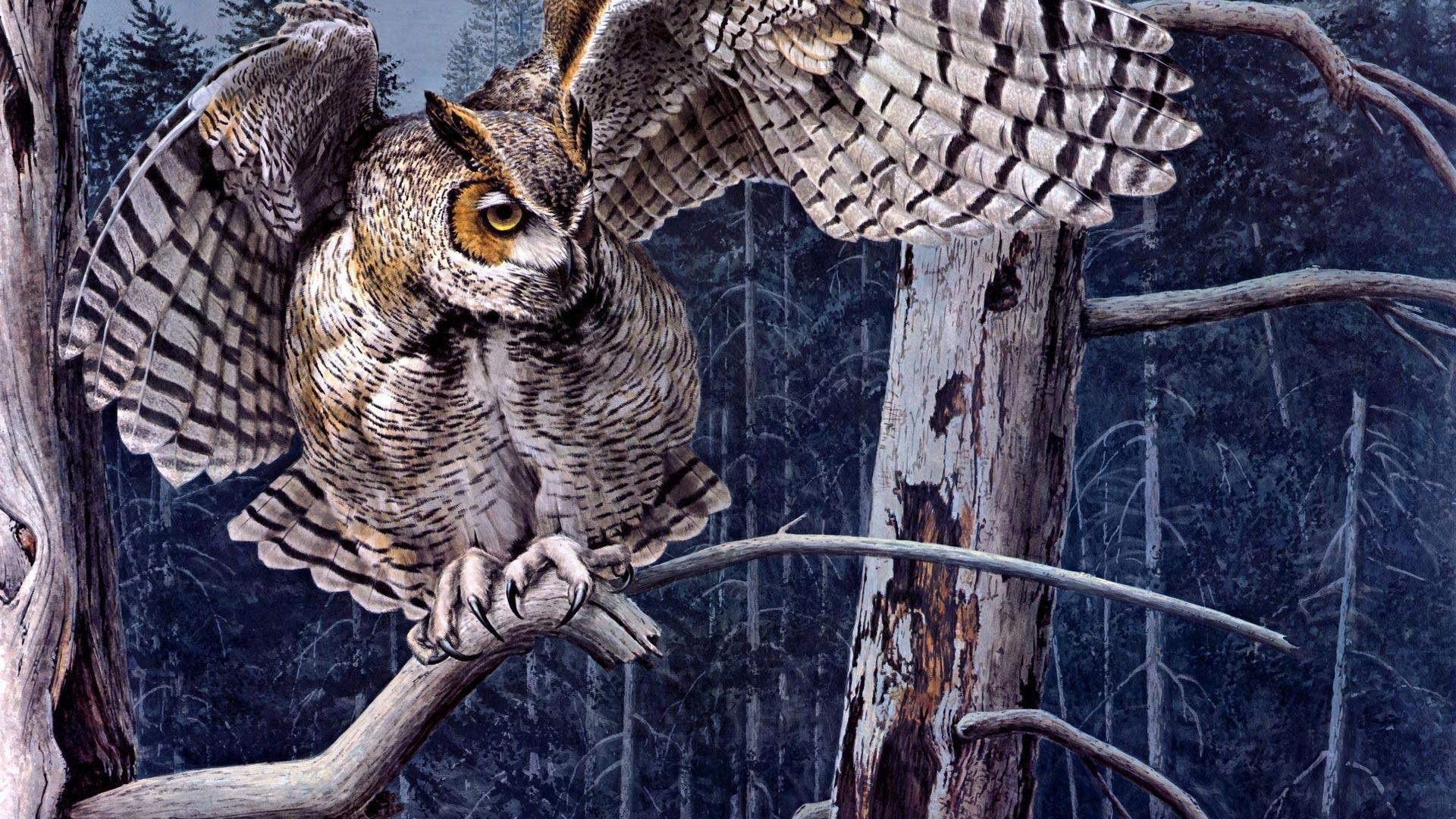 Обои Сова с раскрытыми крыльями, картинки - Обои для ...