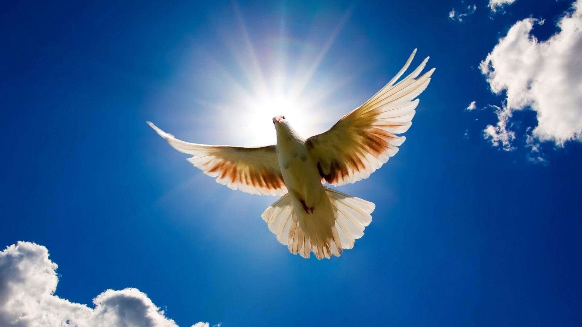 картинки белая птица в небе люди панически боятся
