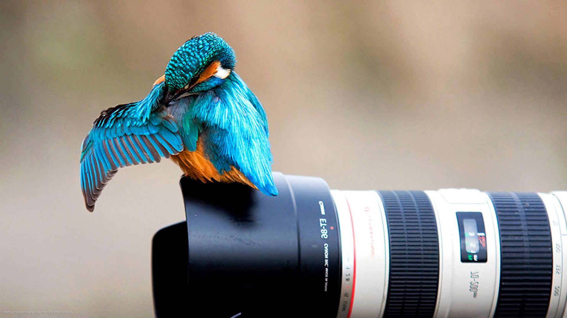 Объектив пентакс для пленочных фотоаппаратов слайд