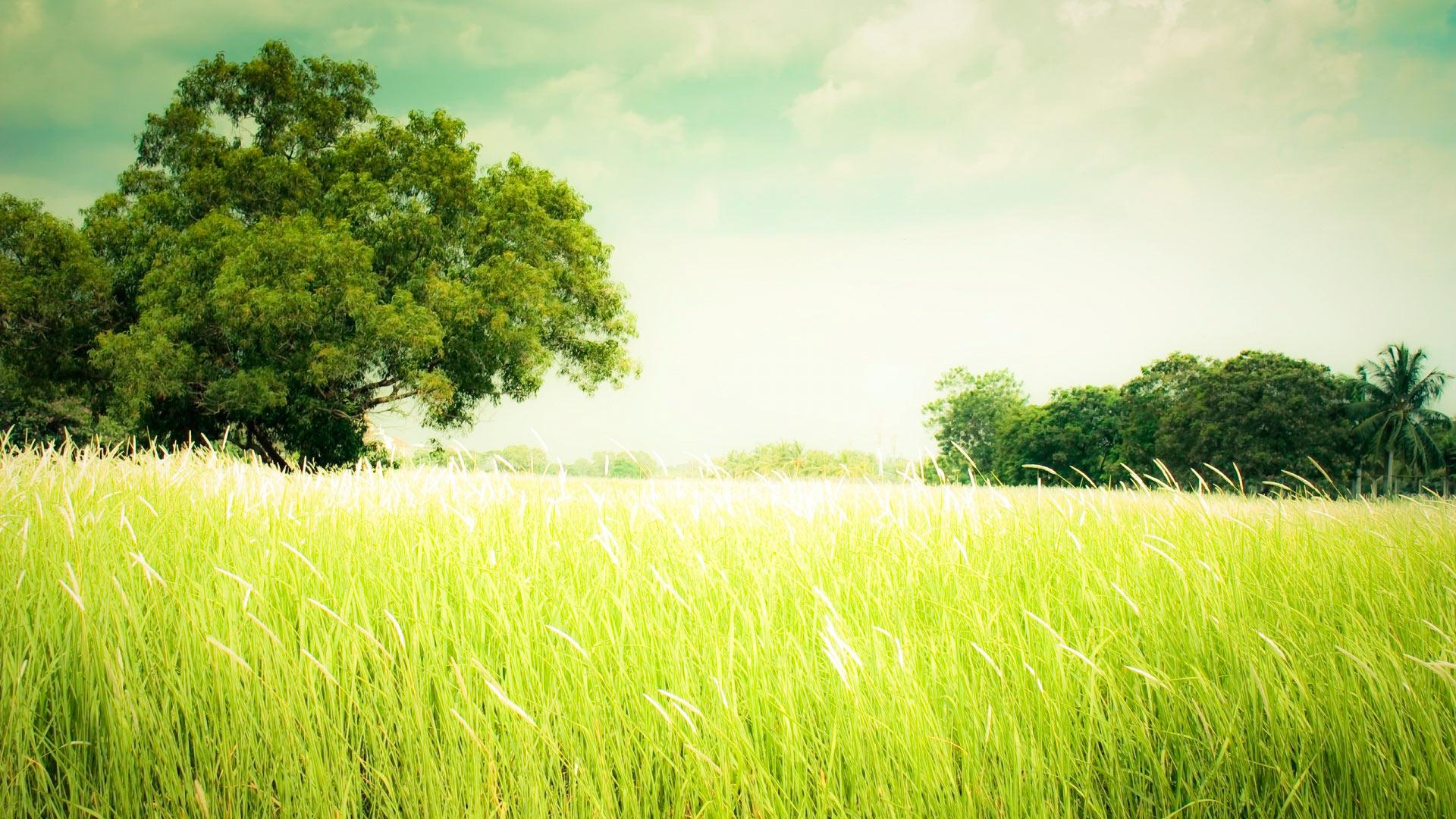... Летнее поле травы, Поле с деревьями: www.fullhdoboi.ru/photo/nature/letnee_pole_travy/6-0-15870