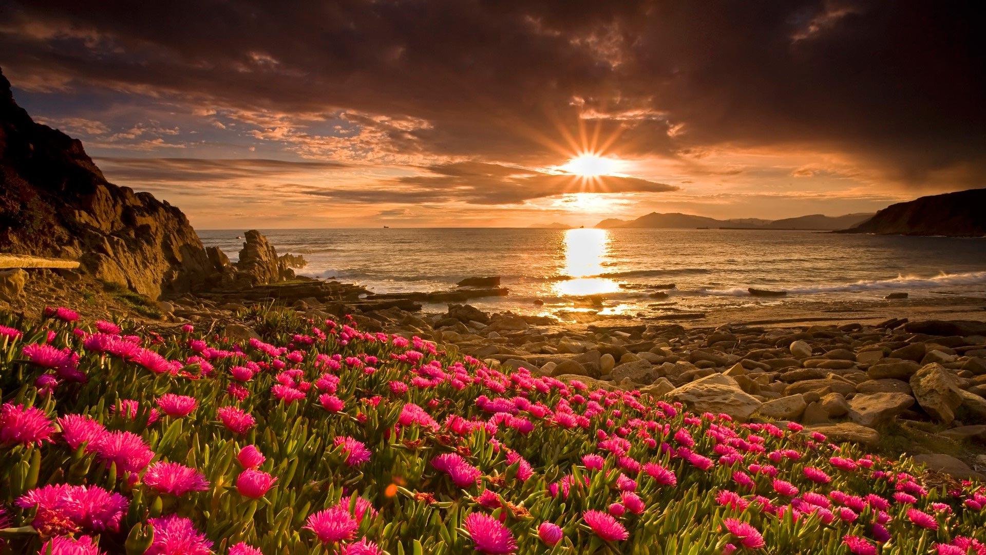 тесто красивые цветы в природе широкоформатное фото очень популярный